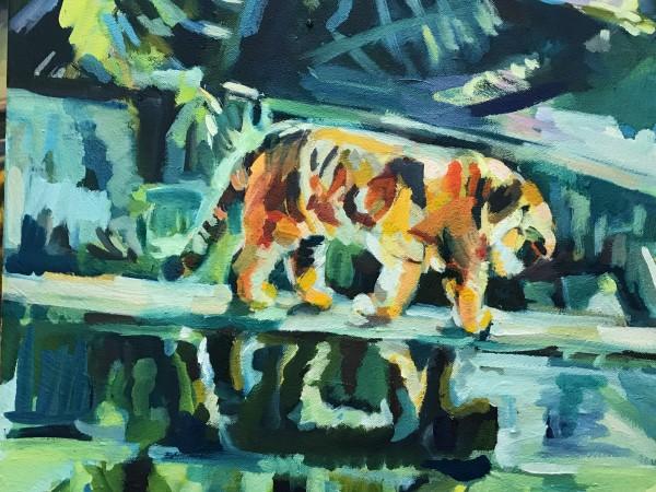 Monsieur Tiger